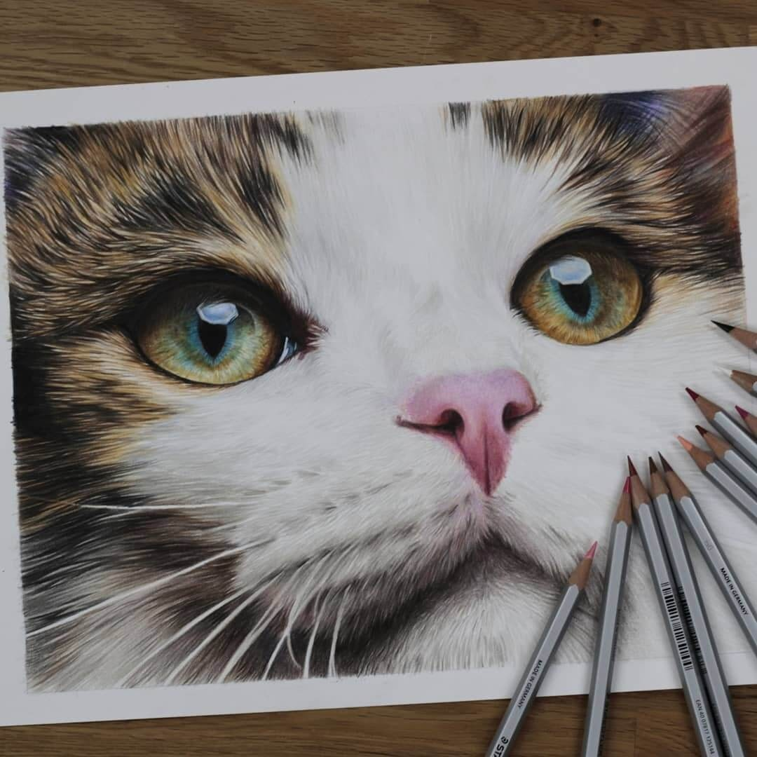 10-The-Cat-s-Beautiful-Eyes-Jae-Kyung-Domestic-and-Wild-Animals-Pencil-Drawings-www-designstack-co