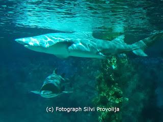 Haie Meeresaquarium Zella Mehlis Fotograph (C) Silvi Provolija