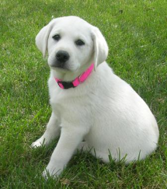 Gallery Puppy Pictures
