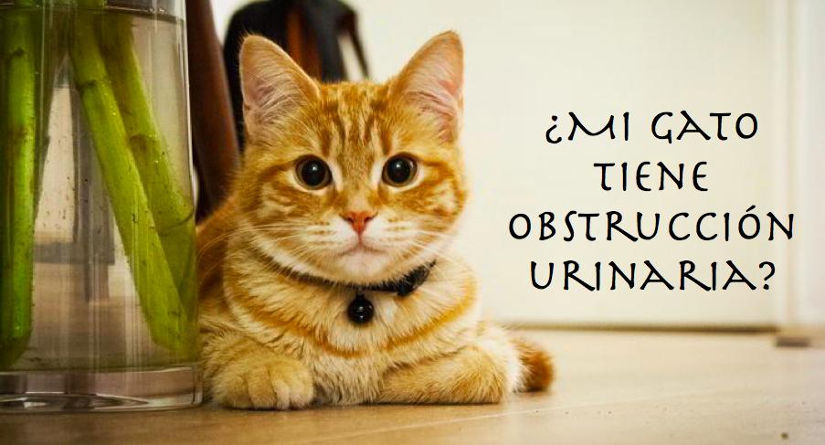 ¿Qué causa la obstrucción uretral en los gatos?