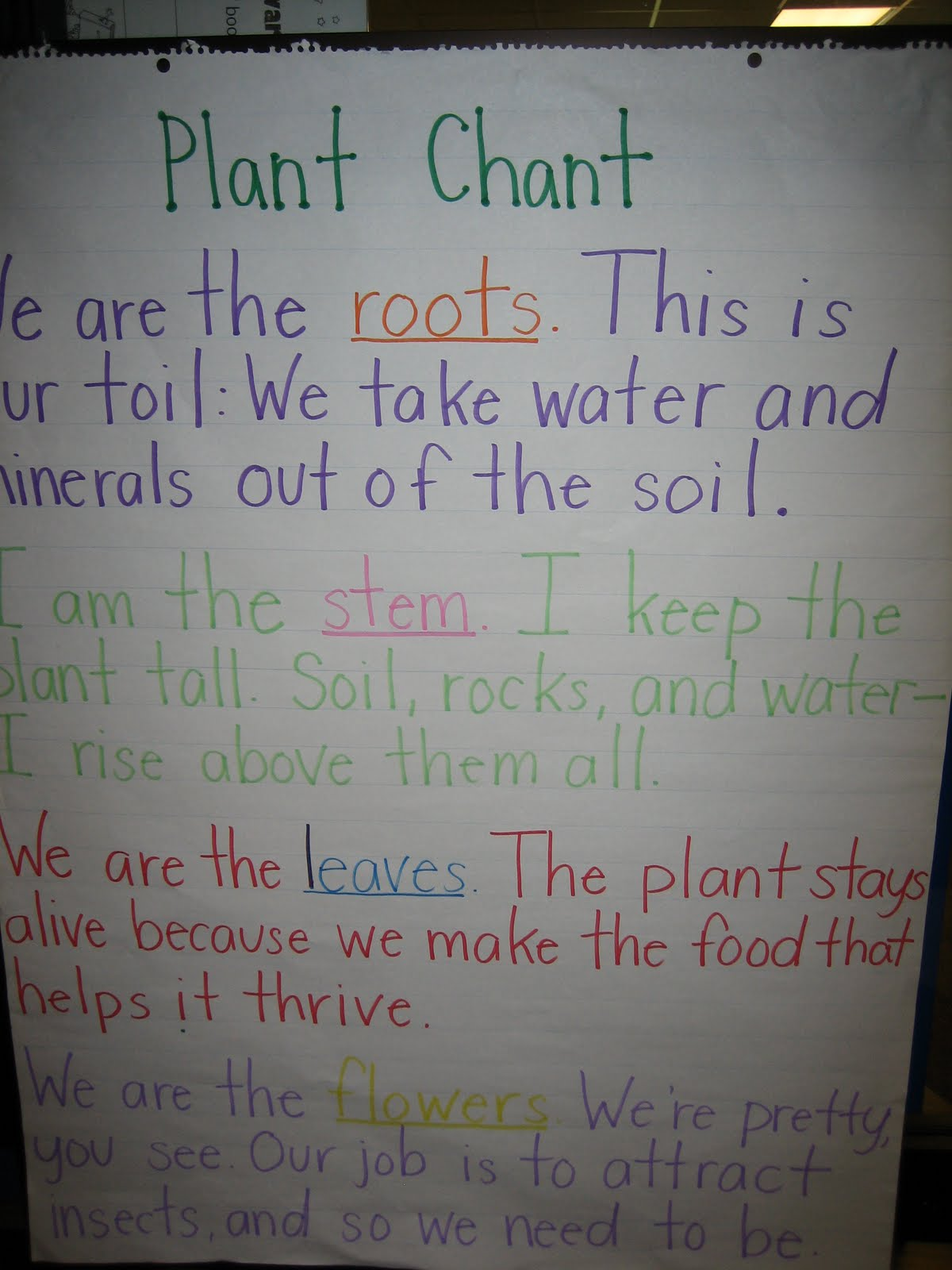 Plant Life Cycle Pictures For Second Grade