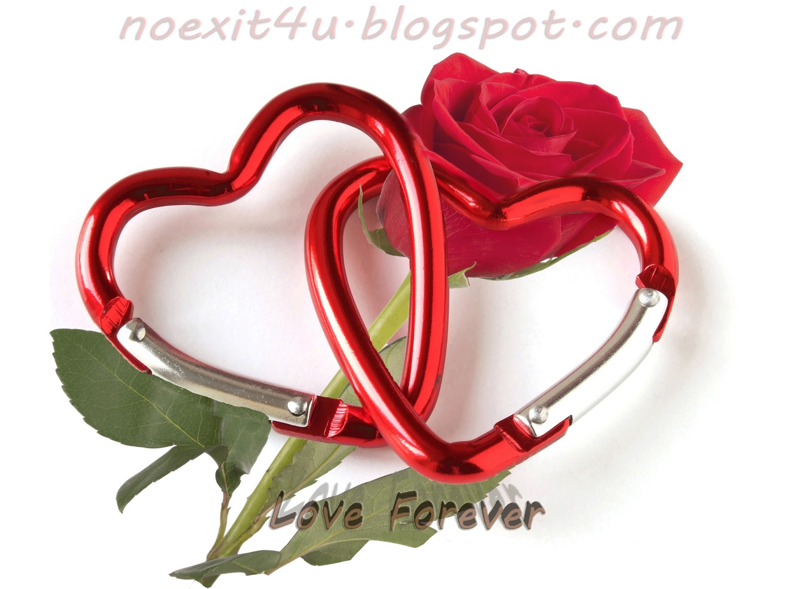 Hd Love Forever Wallpaper Noexit4ucom