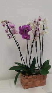 tres orquídeas