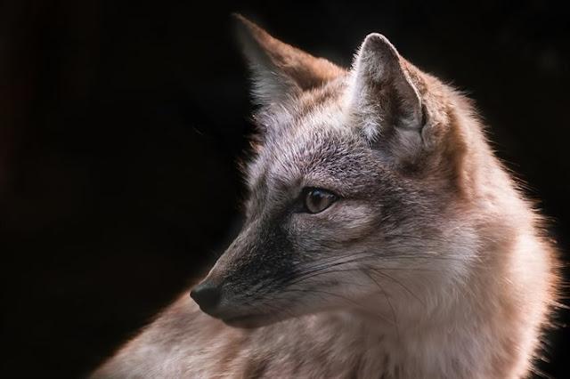 По Ульяновску бегают дикие животные