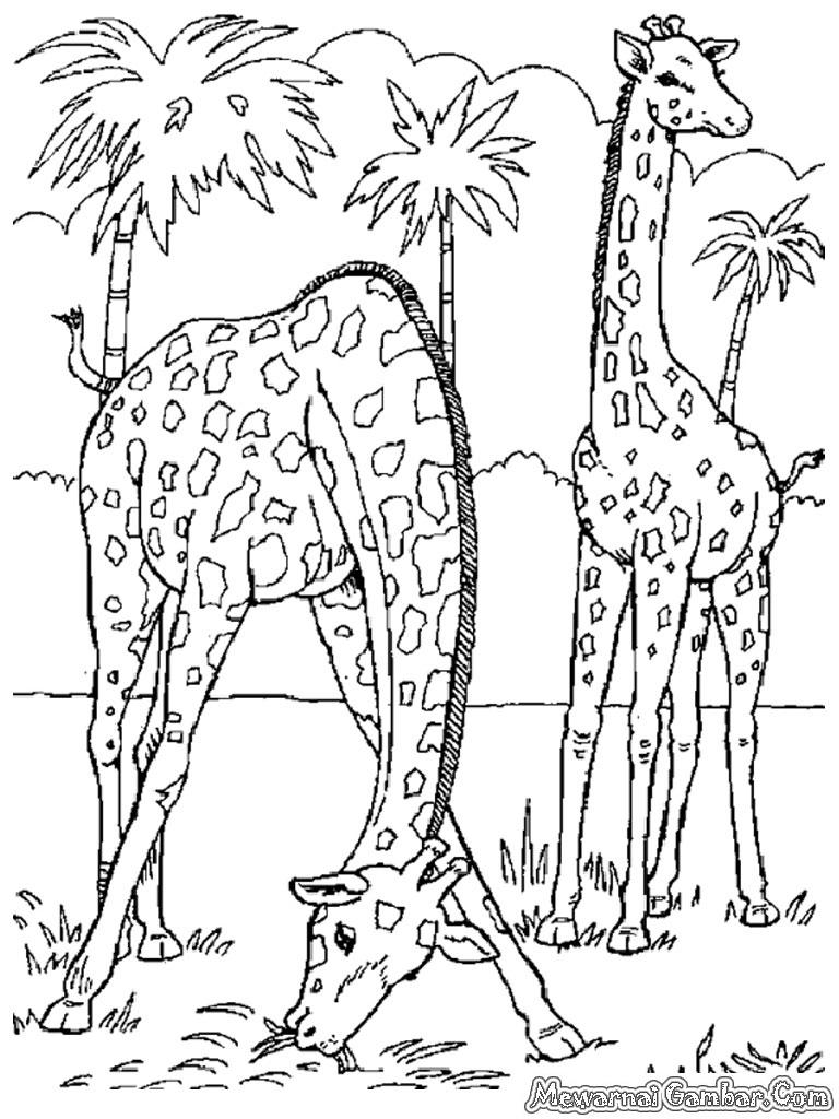 Catatanku Anak Desa Gambar Kebun Binatang Mewarnai