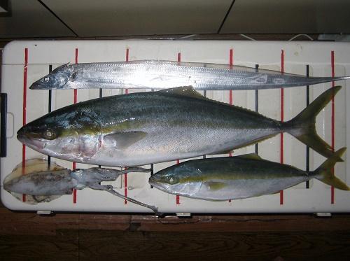 瀬戸内海ジギング 関西の船釣りで釣れる 竿とリール