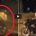 This Couple Was Seen Having S*x While On a Moving Motorcycle—Reckless and Disgusting!