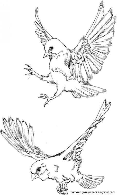 Flying Bird Drawing Tumblr
