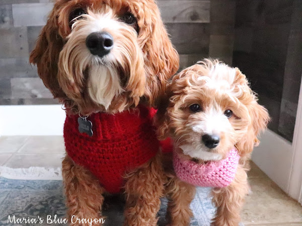 Crochet Dog Sweater - Free Step by Step Tutorial