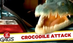 Funny Video – Alligator Attack Caught on Tape