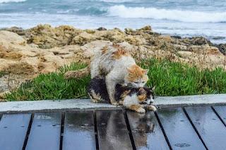 Cara Menangani Kucing Sedang Stres