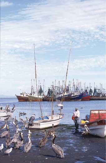 Aracely del puerto villegas 22 antildeos - 5 1