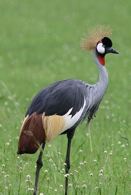 Africa birding safaris, Uganda birding safaris, safari Africa, Africa safaris