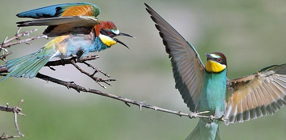 Πραγματικό πουλί pic
