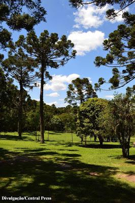 Lapa, Paraná, mata do urubu, natureza, conservação ambiental, natureza, preservação ambiental, meio ambiente