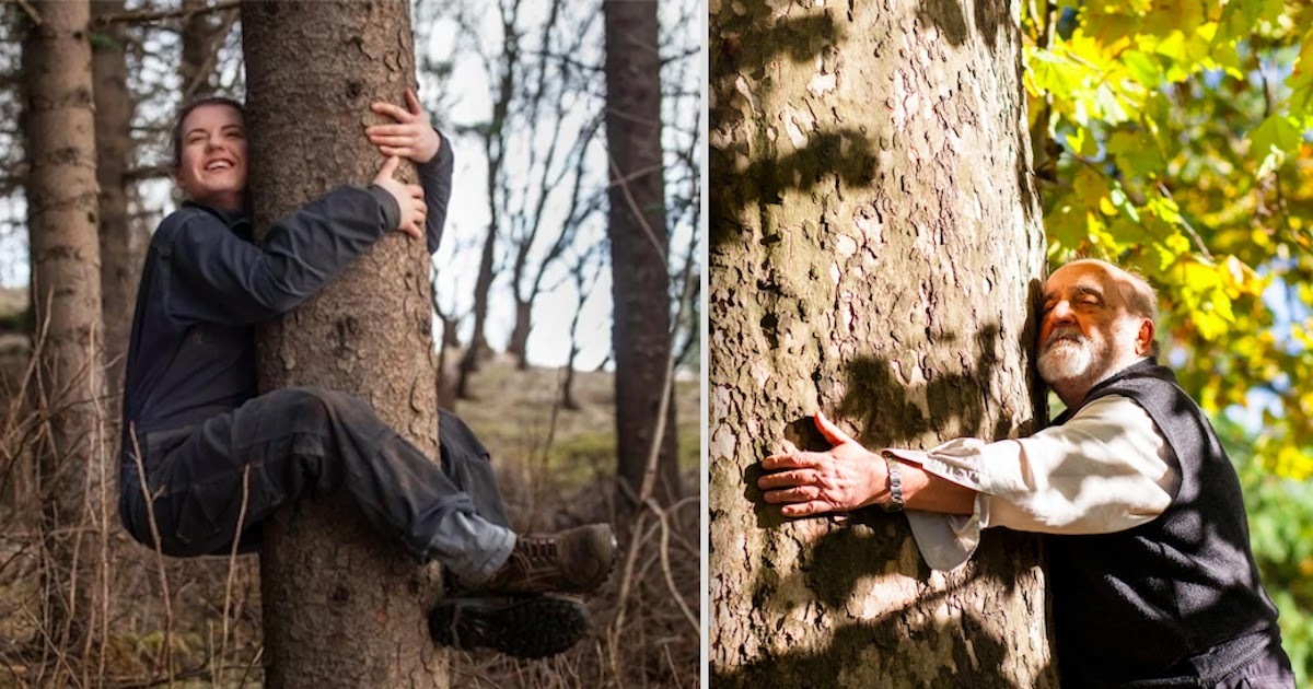 People In Iceland Hug Trees To Improve Their Mental Health