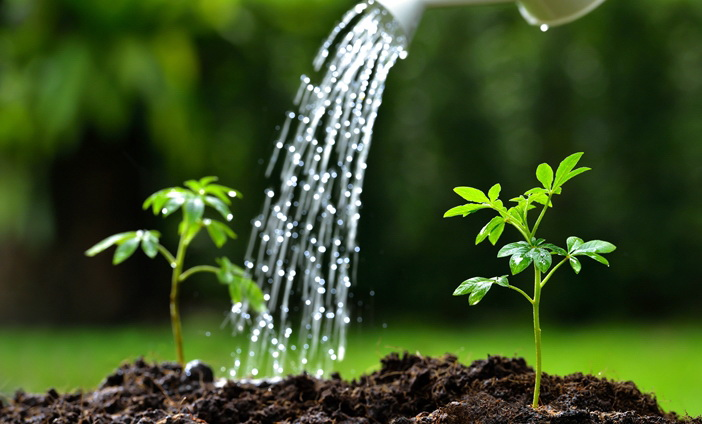 Aturan Penyiraman Tanaman Yang Benar Agar Tanaman Selalu Sehat dan Segar