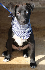 ADOPTABLE DOG OF THE WEEK!!! Click photo for all info AND a video!  please, please OPT TO ADOPT!
