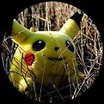 Pokémon in the wild