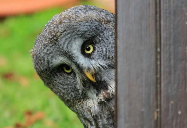 Mengapa Burung Hantu Mencari Makan Di Waktu Malam