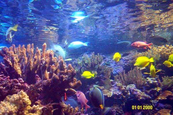 Gambar Ikan Laut  Dunia Binatang