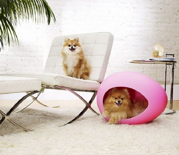 Cute Beds For Pets Combine With Interior Decoration Ideas