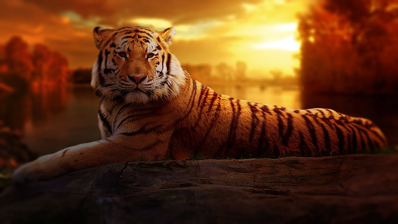 4k ultra hd animal wallpaper images biography and india 39 s - Ultra hd animal wallpapers ...