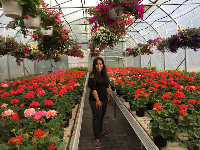In the greenhouse full of flowers  tracing the paradise
