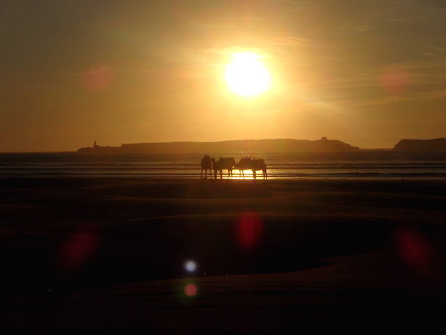 Sunest & camels, Essaouira beach, Morocco.