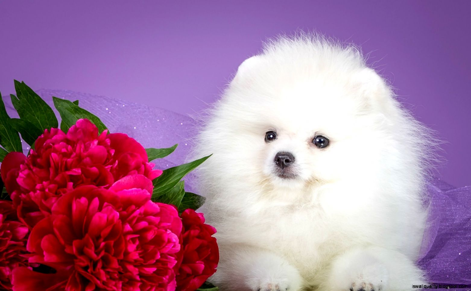 Cute Animal White Wallpaper Hd Wallpapers Quality