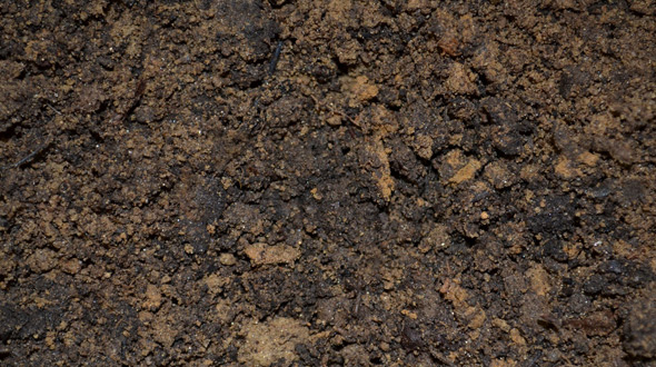 Nutrient rich and moist mulched soil