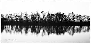 Az Atkai Holt Tisza partja és tökröződés