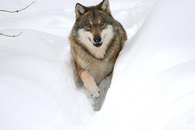 Buongiornolink - Vi siete mai domandati perchè la neve è bianca