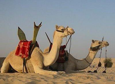 Que significa soñar con camello
