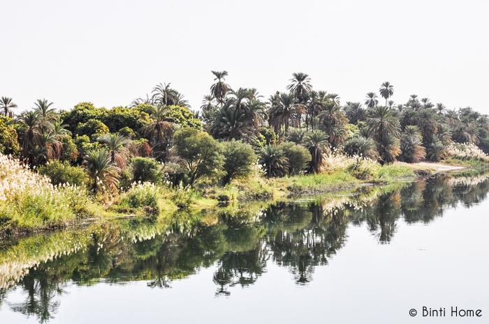 Nile Luxor green - Binti Home