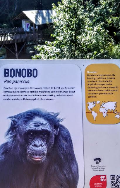 Informatiebord Bonobo, Bonobo's zijn mensapen. De vrouwen maken de dienst uit. Zij werken samen om de lichamelijk sterkere mannen te domineren. Door elkaar te vlooien en door seks wordt deze samenwerking onderhouden en worden sociale conflicten opgelost of voorkomen