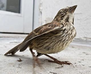 Khasiat/Manpaat Dan Harga Terbaru Obat Cacing Untuk Burung Kicau Saat Ini