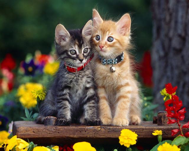 Imagenes De Gatitos Tiernos Para Descargar Gratis: Imagenes Tiernas De Animales Para Descargar