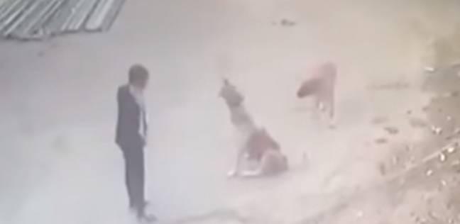 بالفيديو| معركة بين رجل وكلبين تنتهي بطريقة مثيرة
