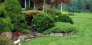 Shrub Landscaping
