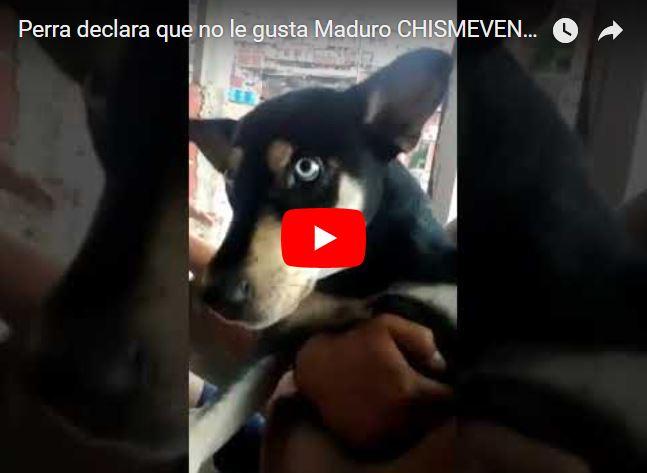 Una Perra declaró que no le gusta Maduro
