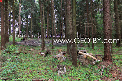 Крылово. Непромышленная рубка леса