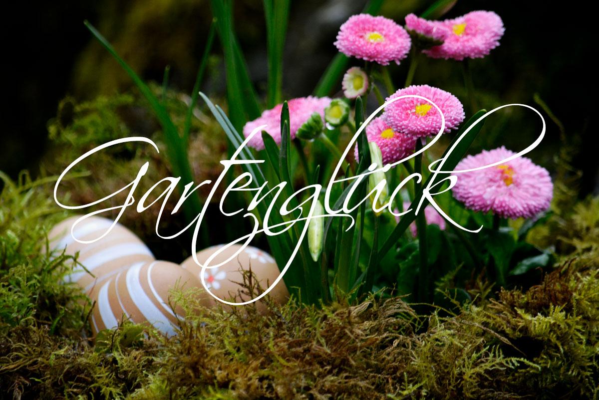 Gaensebluemchen, Tausendschoen, Gartenglueck, Gartenblog