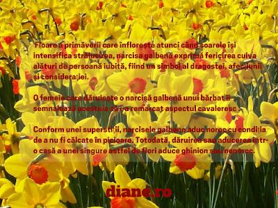 Narcisa galbena