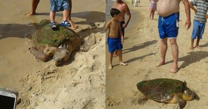 Sea Turtle Who Was Stepped On And Beaten For Selfies In Lebanon Is Now Recovering