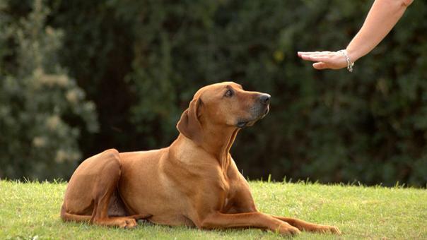 veterinariosmza: Amo entrenado: Perro obediente