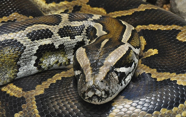This woman unbelievbaly sleeps with a snake every night.  But when the vet told her about THIS, she was in shock!