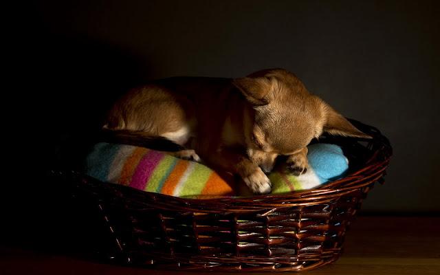 Hond lekker aan het slapen in zijn mand