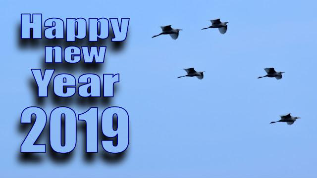 happy new year 2019 3d hd wallpaper