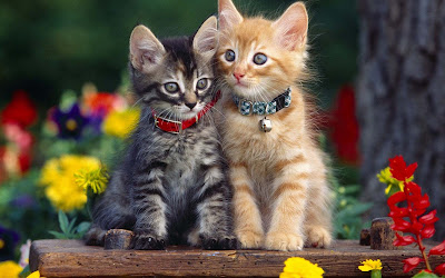 lovelycat-pictures-for-background
